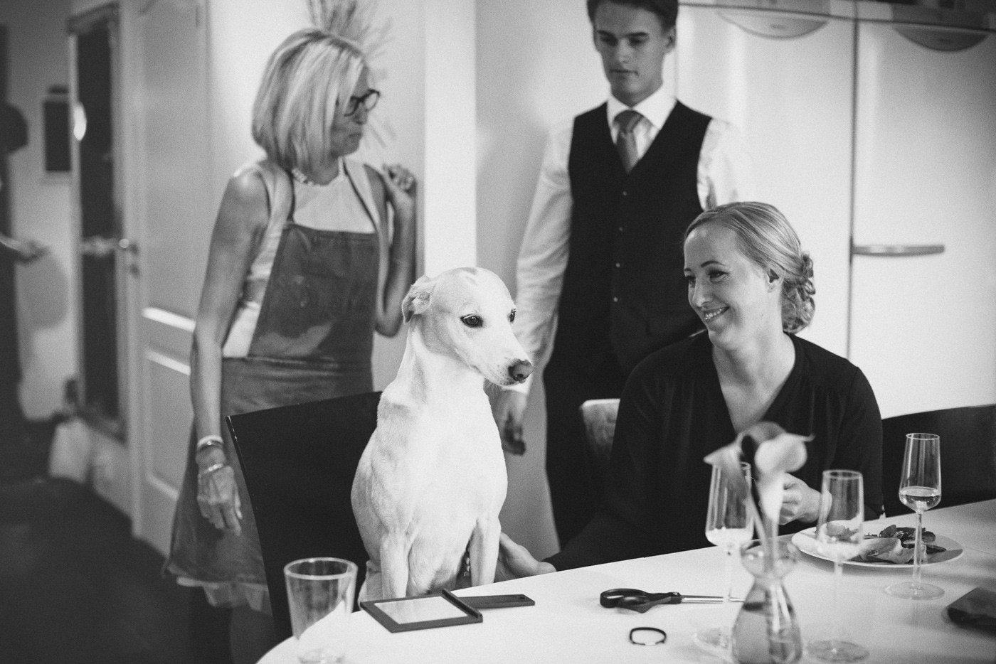 hund bröllop skanör