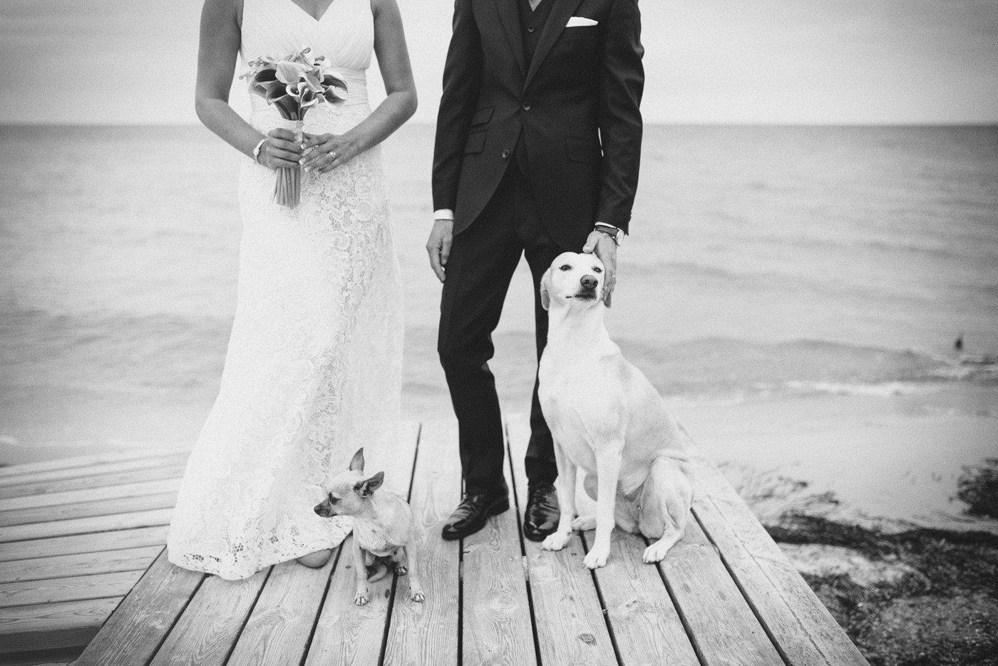 Bröllop brygga kärlek